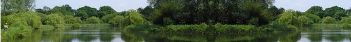 Newland Hall Fishing Lakes Essex